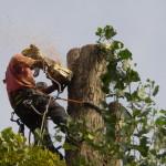 Balesetveszélyes fák a közvetlen környezetében? Fakivágás!